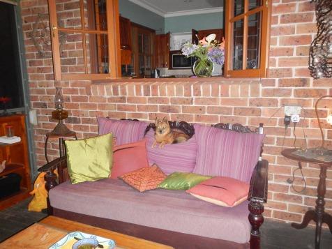 Silus making himself at Home