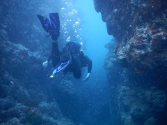 Swimming through a crack in the reef