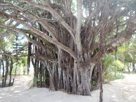 Beautiful Trees on Amedee Island
