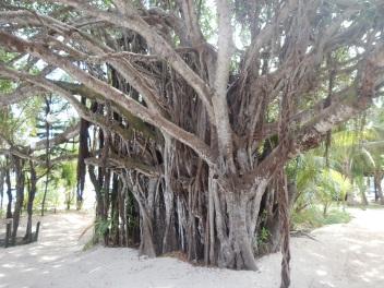 Beautiful Trees on Amedee Island