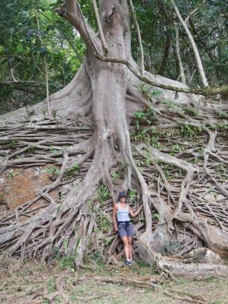 Root wall