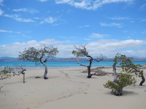 Testard Island