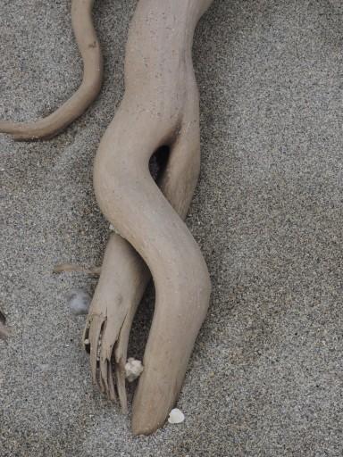 Erotic driftwood
