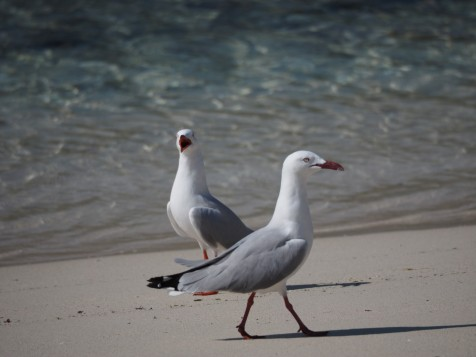 Sea gulls on Adventure island