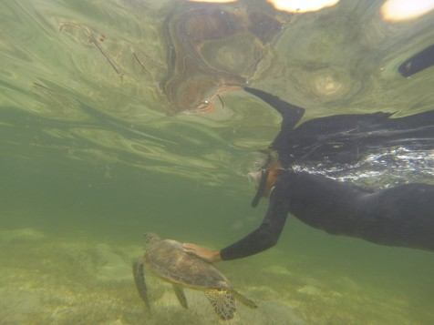 Touching turtles