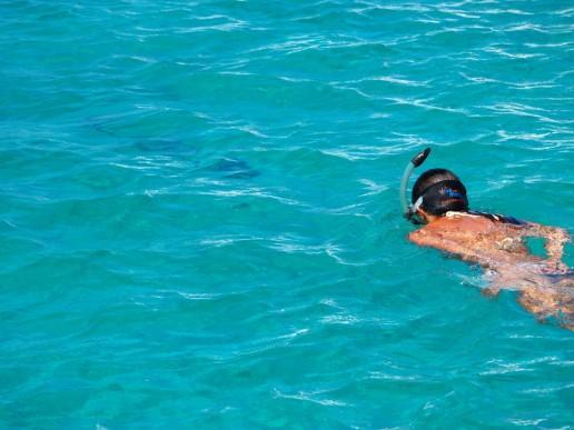 Following the big barracuda